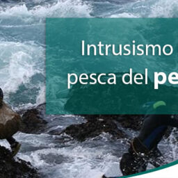 intrusismo-percebe-pesca